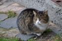 Tapeta Kočka poštovní
