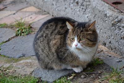 Tapeta: Kočka poštovní