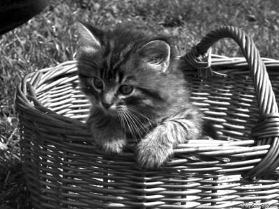 Tapeta: Kočka Tom