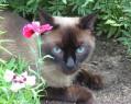 Tapeta Kočka a květ