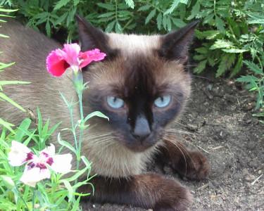 Tapeta: Kočka a květ