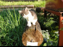 Tapeta Kočka na kládě
