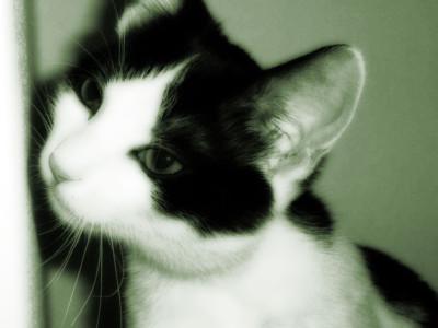 Tapeta: Kočka v zelené