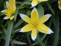 Tapeta Kolekce květin