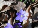 Tapeta Kolekce květin 10