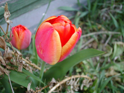Tapeta: Kolekce květin 12