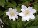 Tapeta Kolekce květin 14