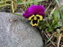 Tapeta Kolekce květin 15