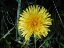 Tapeta Kolekce květin 16