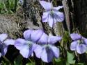 Tapeta Kolekce květin 19