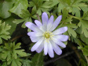Tapeta Kolekce květin 2
