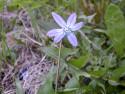 Tapeta Kolekce květin 20