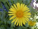 Tapeta Kolekce květin 3