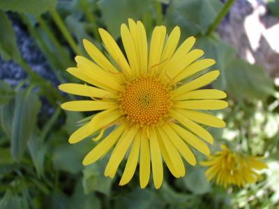 Tapeta: Kolekce květin 3