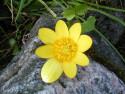 Tapeta Kolekce květin 4