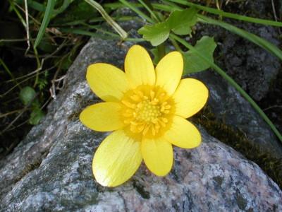 Tapeta: Kolekce květin 4