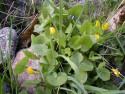 Tapeta Kolekce květin 6