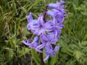 Tapeta Kolekce květin 7