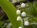 Tapeta Kolekce letních květin 10