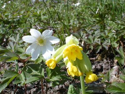Tapeta: Kolekce letních květin 11
