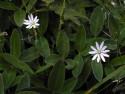 Tapeta Kolekce letních květin 12