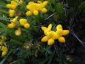 Tapeta Kolekce letních květin 13
