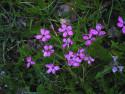 Tapeta Kolekce letních květin 14