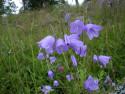 Tapeta Kolekce letních květin 15