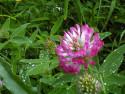 Tapeta Kolekce letních květin 16