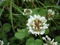 Tapeta Kolekce letních květin 17