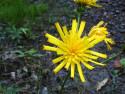 Tapeta Kolekce letních květin 19