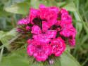 Tapeta Kolekce letních květin 2