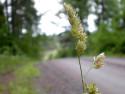 Tapeta Kolekce letních květin 20