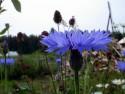 Tapeta Kolekce letních květin 3