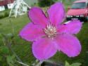 Tapeta Kolekce letních květin 5