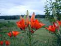 Tapeta Kolekce letních květin 6
