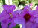 Tapeta Kolekce letních květin 7