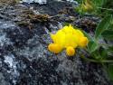 Tapeta Kolekce letních květin 8