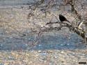 Tapeta Kolekce ptáků