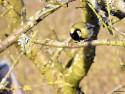 Tapeta Kolekce ptáků 12