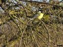 Tapeta Kolekce ptáků 13