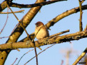 Tapeta Kolekce ptáků 16