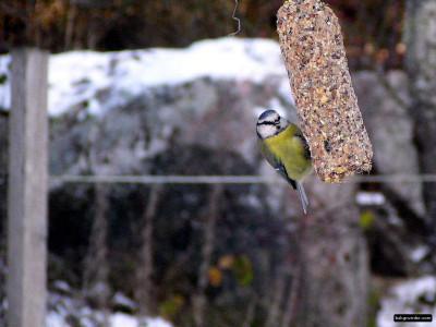 Tapeta: Kolekce ptáků 2