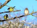 Tapeta Kolekce ptáků 21