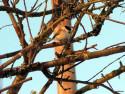 Tapeta Kolekce ptáků 22