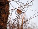 Tapeta Kolekce ptáků 23