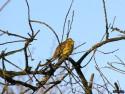 Tapeta Kolekce ptáků 25