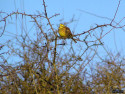 Tapeta Kolekce ptáků 26