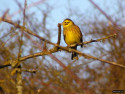 Tapeta Kolekce ptáků 27