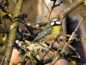 Tapeta Kolekce ptáků 4